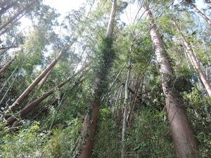 190920-風で折れる森