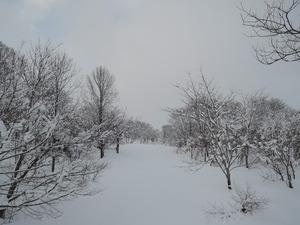150211-雪景5