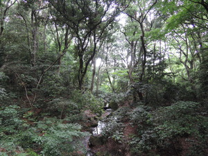 150530-明治神宮の森1