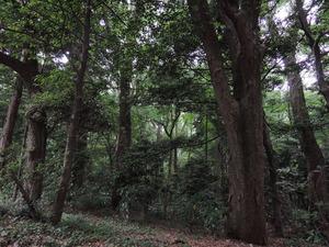 150530-明治神宮の森3