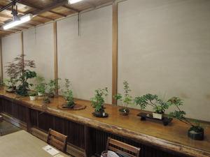 160611-盆栽2