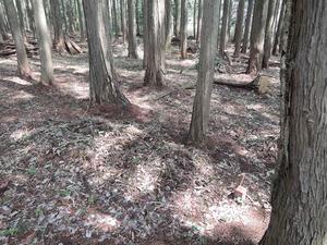 150408-KBOSCOの森2