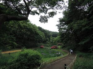 150530-明治神宮の森2