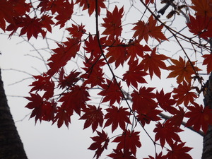 111108-妙高高原の紅葉