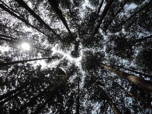 150408-KBOSCOの森1