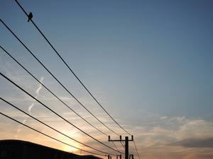 181124-鳥影