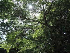150501-木漏れ日1