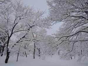 150211-雪景2