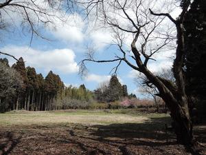150318-大高善兵衛公園