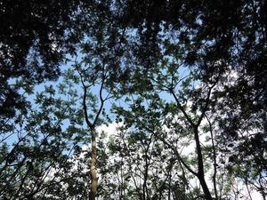 150501-木漏れ日5