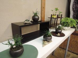 150513-盆栽教室1