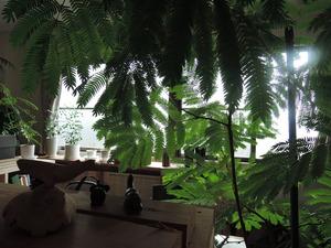 151110-観葉植物