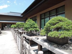 150513-盆栽美術館2
