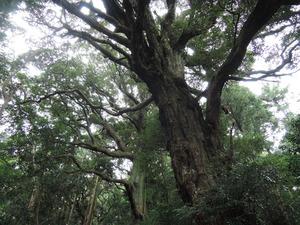 181217-大樹