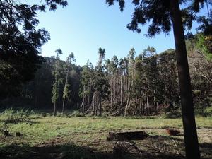 191101-倒木