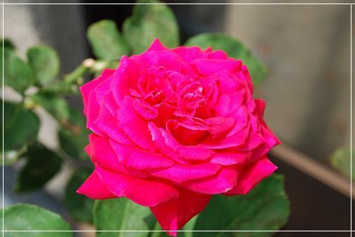 DSC_0034_20120729110459.jpg