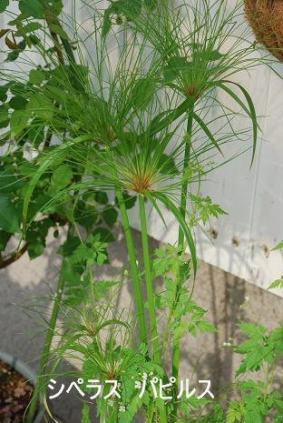 DSC_0129_20110630101009.jpg
