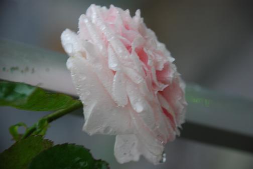 DSC_0003_20120622091050.jpg