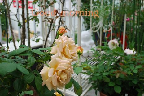 DSC_0003_20120709075833.jpg