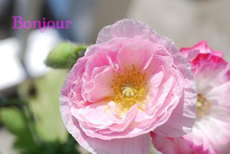 DSC_0463_20110531104806.jpg