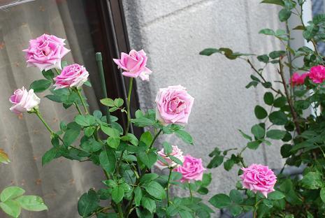 DSC_00031_20120717071142.jpg