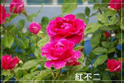 DSC_0096_20120522114834.jpg