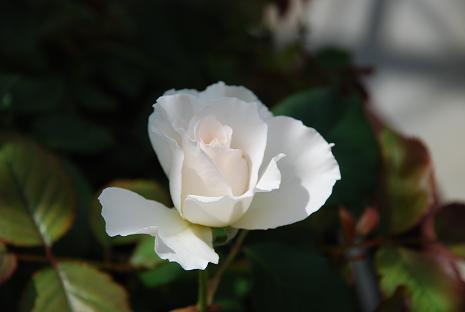 DSC_0005_20120623103718.jpg