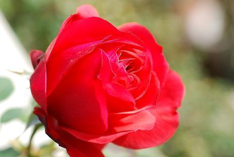 DSC_0112_20121129072929.jpg