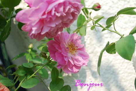 DSC_0040_20130810120540be8.jpg