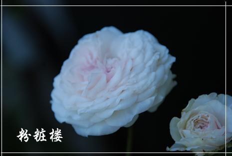DSC_0006_20120627100332.jpg