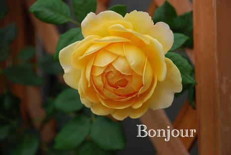 DSC_0002_20120630111935.jpg