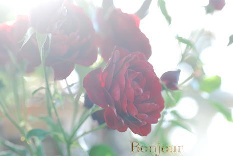 DSC_0108_20121128163603.jpg