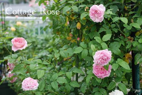 DSC_0025_20120720081654.jpg