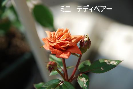 DSC_0141_20110910121014.jpg