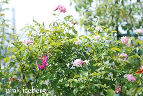 DSC_0090_20110813102318.jpg