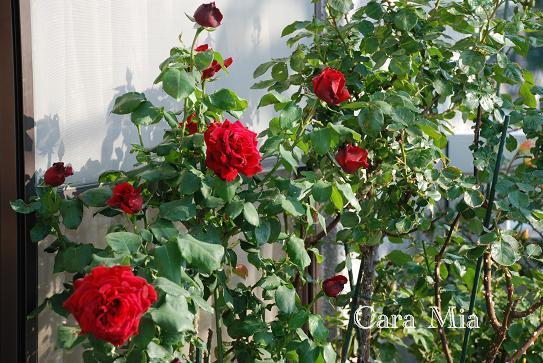 DSC_0029_20130506080837.jpg