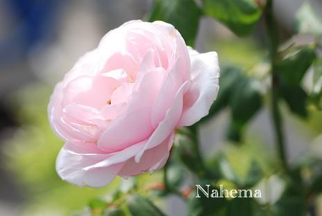 DSC_0016_20121027115111.jpg