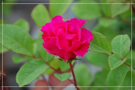 DSC_0012_20110509094249.jpg