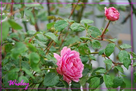 DSC_0126_20130625085456.jpg
