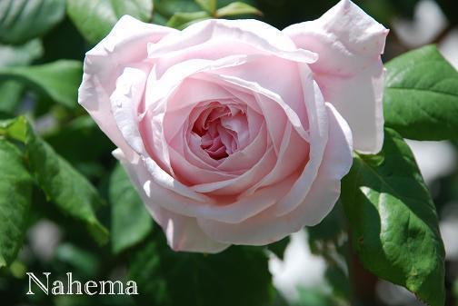 DSC_0042_20120525084634.jpg