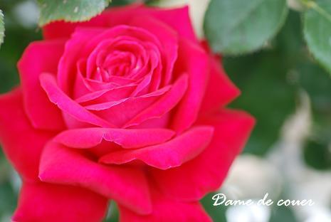 DSC_0128_20130629082521.jpg