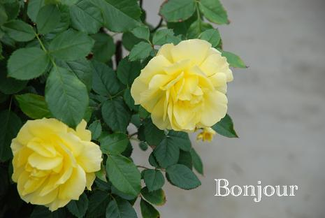 DSC_0019_20121117120612.jpg