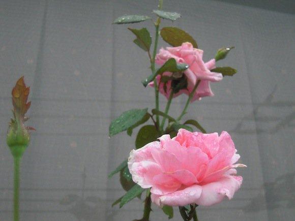 DSCN3569