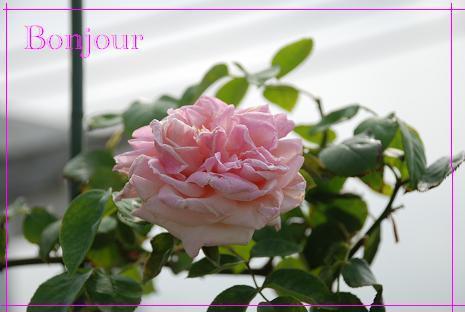 DSC_0018_20120711162702.jpg