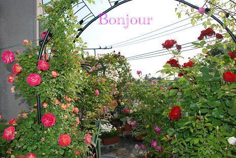 DSC_0003_20110520093923.jpg