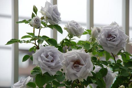 DSC_0157_20110522093652.jpg