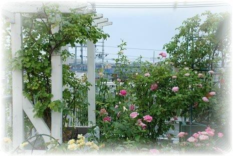 DSC_0109_20110814065014.jpg