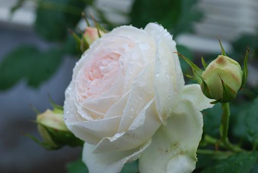 DSC_0129_20120522120213.jpg