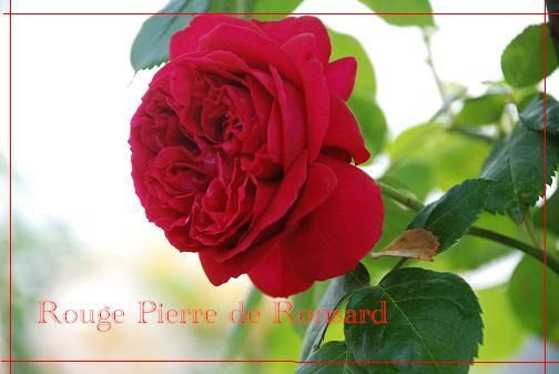 DSC_0013_20120525091411.jpg