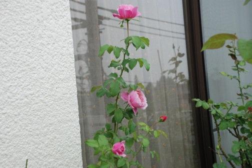 DSC_0027_20130914053850bff.jpg
